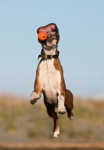 Funny Boxer
