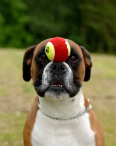 Super self control - boxer Funny