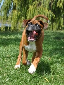 Funny Boxer - What...the....I don't even know.