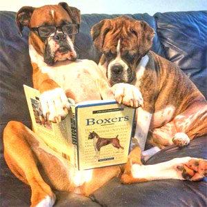 BOXER GUESTBOOK